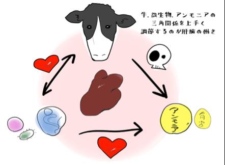 牛、微生物、アンモニアの三角関係をうまく調整するのが肝臓の働き