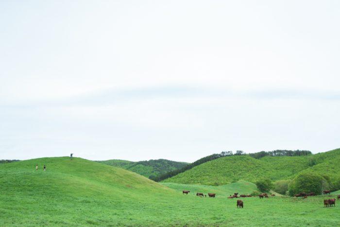 柿木畜産が管理する牧場