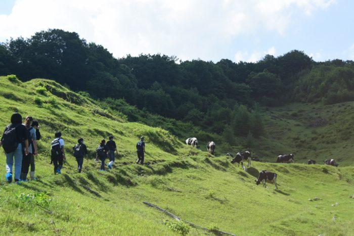 吉塚さんの案内のもと牧場を歩く一行